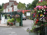 Cheshire Hanging Baskets, Ashton