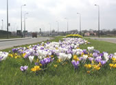 Lord Sheldon Way, Ashton, Spring 2006