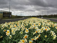 Lord Sheldon Way, Audenshaw, Spring 2009