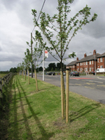 Lumb Lane, Droylsden, Summer 2008