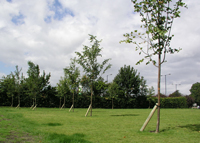 West End Park, Ashton, Summer 2008