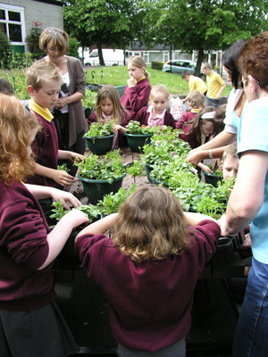 Holden Clough Primary, Ashton, planting hanging baskets