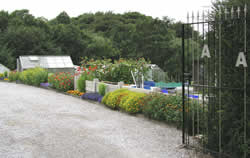 Mottram Road Allotments
