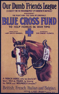 Blue Cross Poster