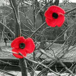 Poppies on tree